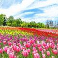 春のお出かけ・春の旅行特集2020